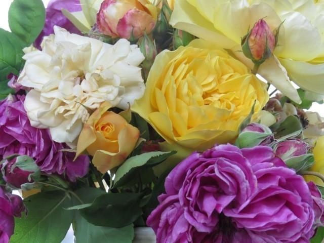 garden roses bedwards