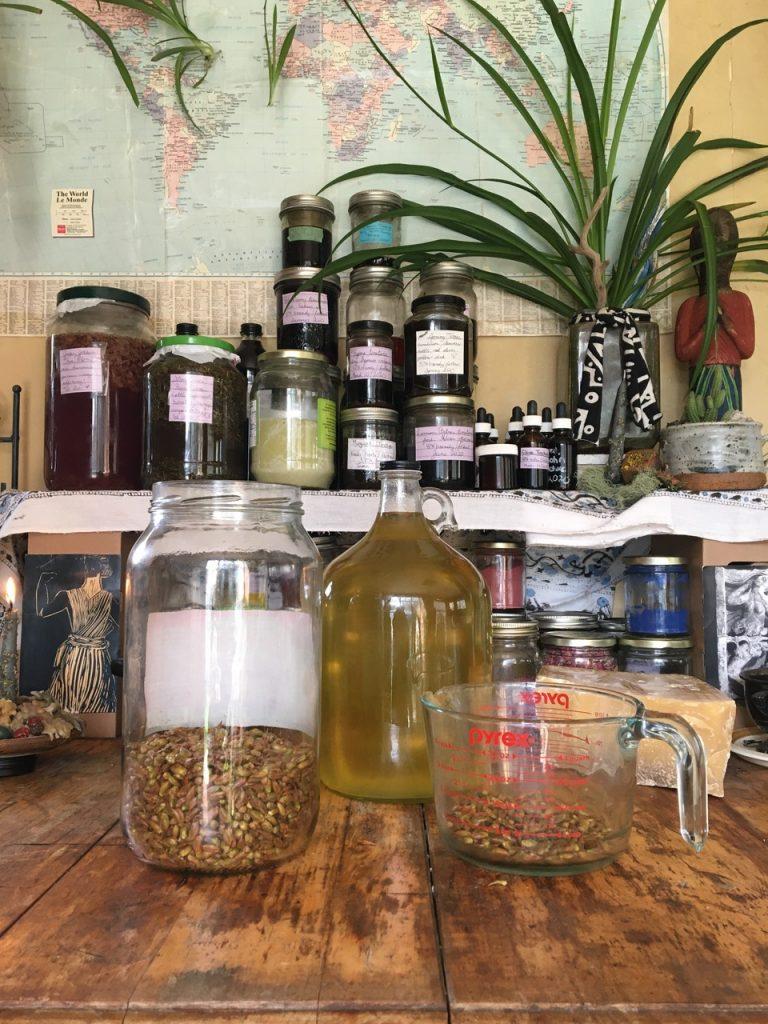 Poplar oil, herbal oils, herbal medicine, wildcrafting